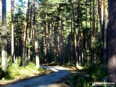 Loma del Noruego y Pinares de Valsaín;rutas peguerinos madrid rutas valle del jerte cerezos rutas p